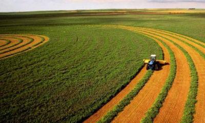 как получить землю под сельское хозяйство