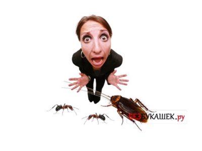 куда обращаться если в доме тараканы
